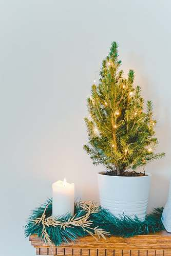 photo christmas white pillar candle plant free for commercial use images