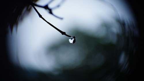 drop focus photo of water droplet raindrop