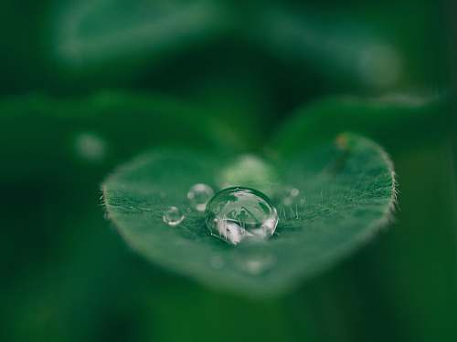 nature green leaf with water drops green