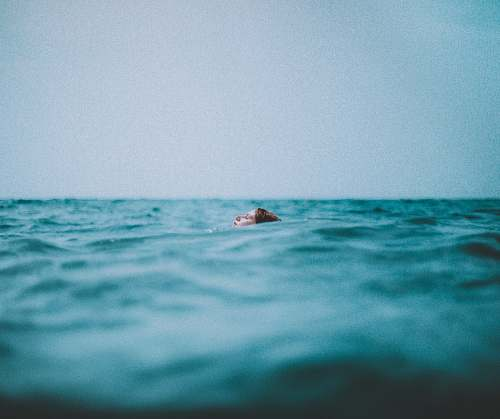photo human woman swimming in a body of water person free for commercial use images