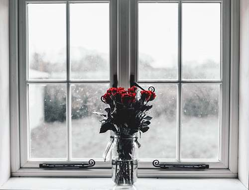 flower selective colors photography of red roses inside clear glass jar filled with water red