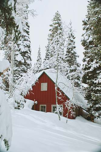 photo snow snow covered wooden house during daytime forest free for commercial use images