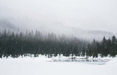 snow snow field and green pine trees during daytime forest