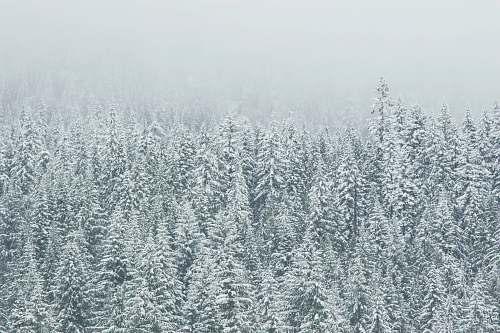 grey trees covering snow snow