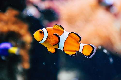 fish clown fish in shallow focus photography human