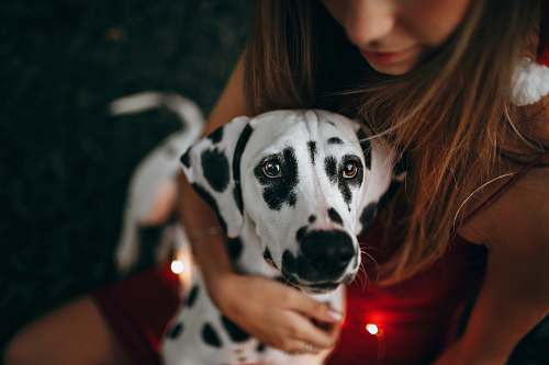 human selective focus photography of white and black dog person