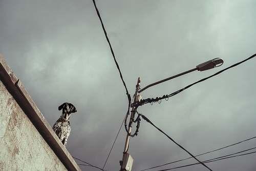 grey short-coated white dog on roof bird