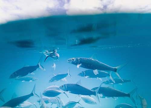 fish school of fish animal