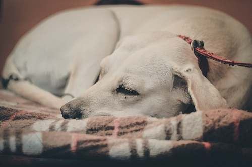animal selective focus photo o dog canine