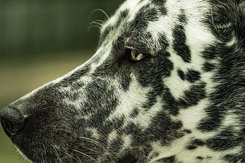 mérida short-coated white and gray dog mexico