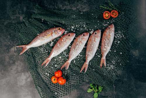 food five fish between tomatoes on black net tomato