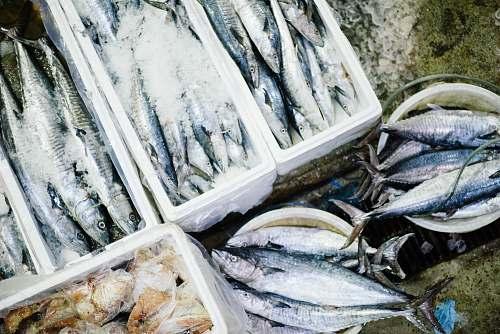 food raw fish lot seafood