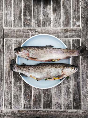 food two silver fishes on round white ceramic plate trout