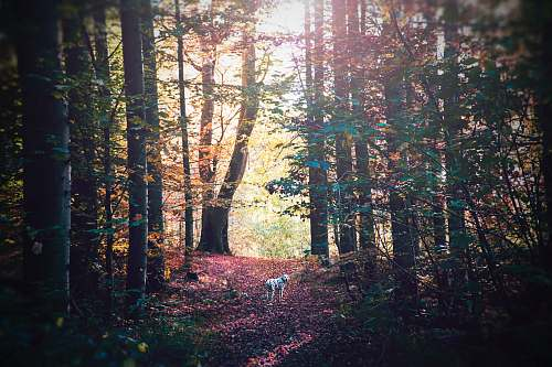 tree white dog on forest nature