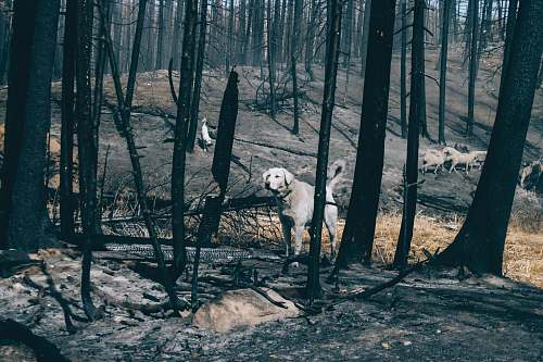 land grey dog walking on burnt forest trees outdoors