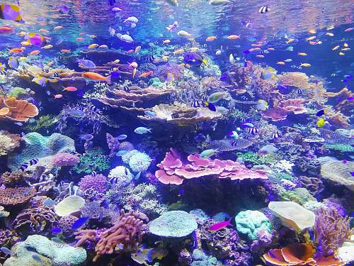 sea school of fish on corals nature