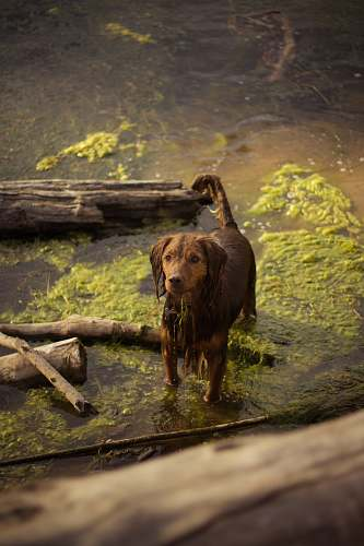 photo wood brown dog on body of water dog free for commercial use images