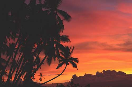 sunset coconut trees under orange and red sky sunrise