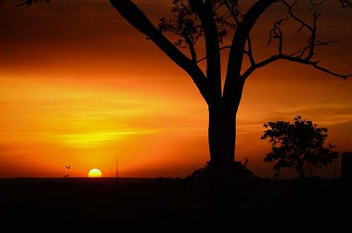 sunset silhouette tree of golden hour tree