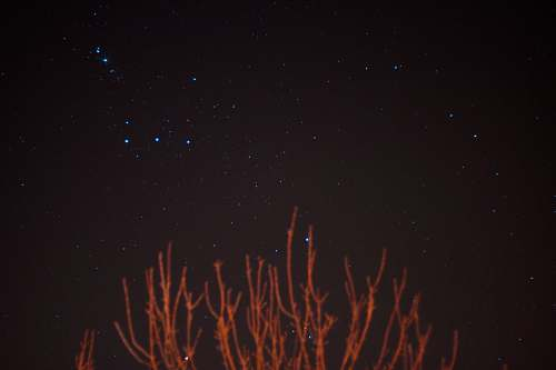 photo nature brown bare trees over blue stars at night night free for commercial use images