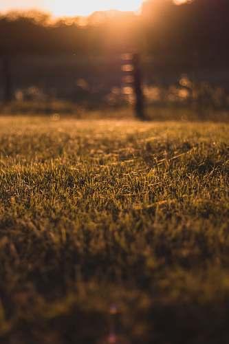 field focus photo of green grass grass