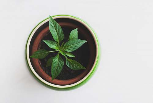 green green leafed plant in pot leaves