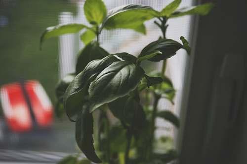 leaf green-leafed plant jar