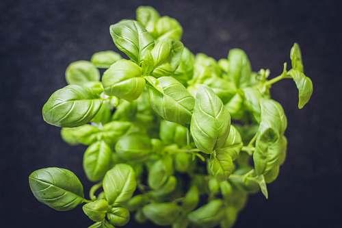 food mint plant vegetable