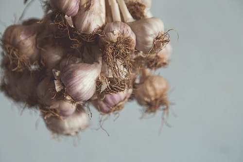 food white garlic garlic
