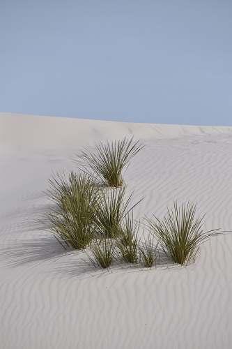 sand green grasses nature