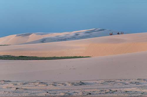 nature people and animals walking on sand dunes during golden hour sand