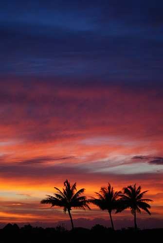 sky several trees during sunset sunrise