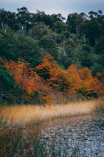 plant water stream grass