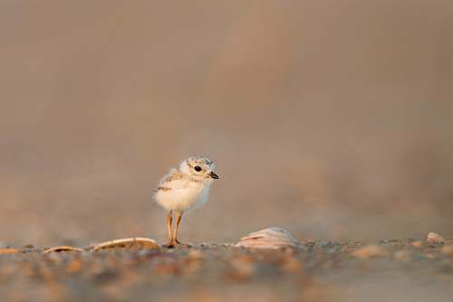 bird focus photography of chick on gray ground animal wallpapers