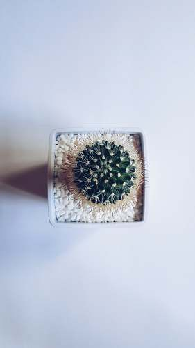 leaves cactus succulent plant on white vase food