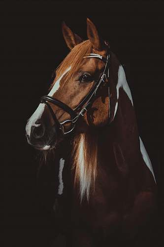 horse brown and white horse on focus photography mammal