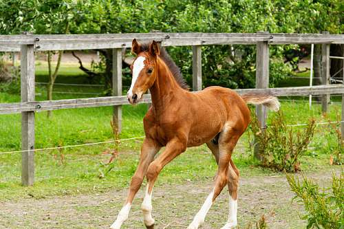 horse brown horse mammal