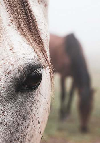 photo horse close view of white horse right eye mammal free for commercial use images