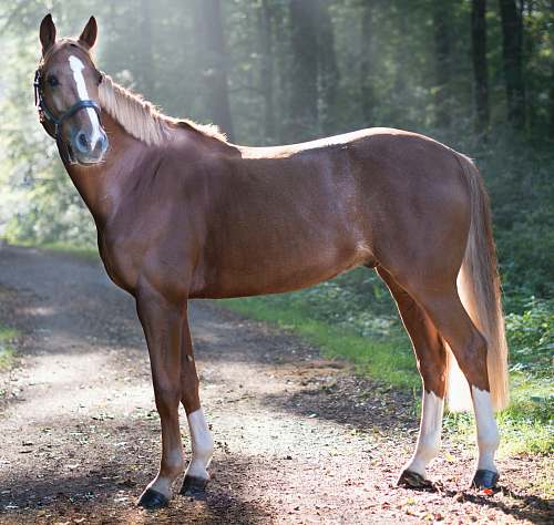 horse closeup photo of brown horse standing surrounded with trees mammal