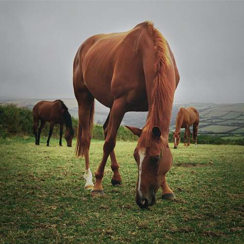 horse horses eating grass on field united kingdom