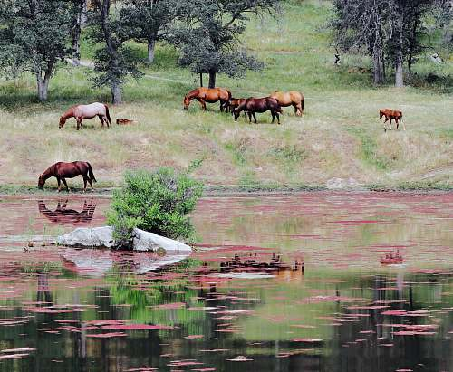 three rivers horses near body of water united states