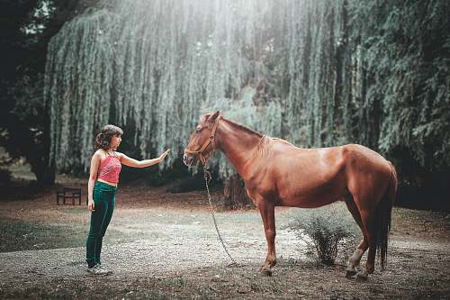 human woman attempting to touch horse's face under tall tree during daytime people