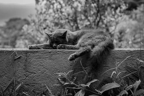 black-and-white grayscale photo of cat animal on concrete wall cofradía de suchitlán