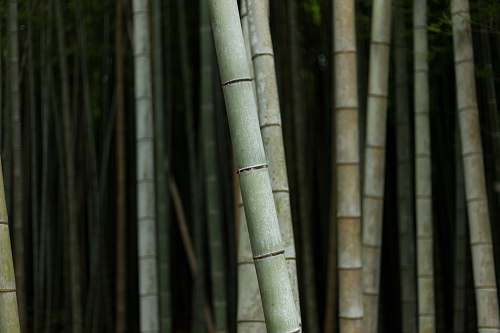 plant selective focus photography of bamboo trees flora