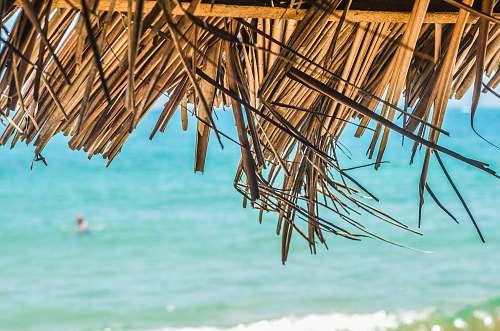 hut brown coconut hut near sea during daytime summer