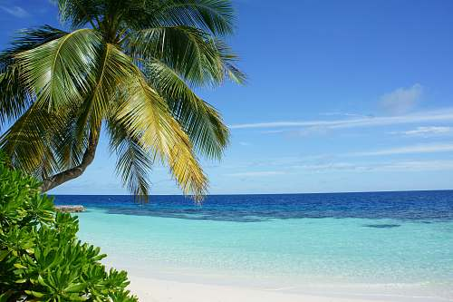 photo sea coconut tree near body of water water free for commercial use images