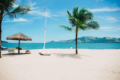 coast coconut tree near shore within mountain range nature