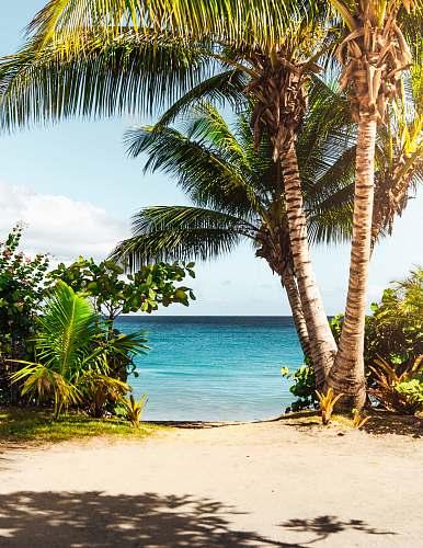 ocean coconut tree on beach tree