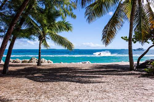 photo nature green leaf coconut trees on beach during daytime water free for commercial use images