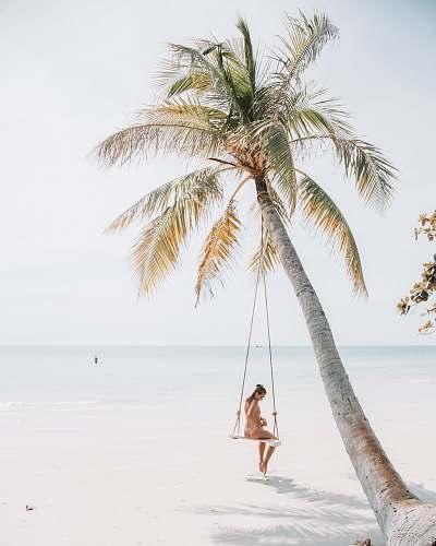 tree woman wearing bikini sitting on swing near coconut tree palm tree